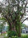Krasser Dschungel mitten in der Stadt.